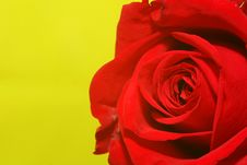 Free Rose-on-green Stock Photo - 609680