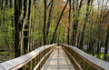 Free Board Walk Through Woods Stock Photos - 6008703
