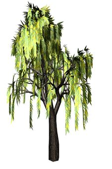 Free Willow Tree Stock Photo - 6000160