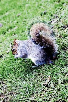 Free Cute Gray Squirrel Stock Photos - 6000793