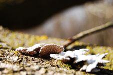 Free Fungus Stock Image - 6001481
