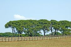Free Row Of Trees Beyond The Fence Royalty Free Stock Photos - 6003658