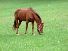 Free Horse On Green Meadow Stock Images - 6004054