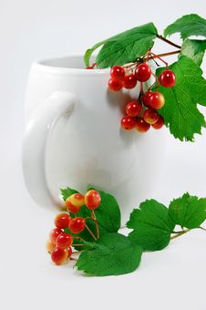 Free Red Berries Stock Image - 6004151