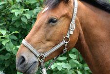 Free Horse Stock Photography - 6004352