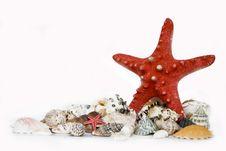 Free Starfishand Seashells Stock Photo - 6005060