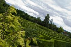 Free Celtic Maze In Wicklow, Ireland. Stock Image - 6005141