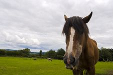 Free Close-up Of A Horse. Wicklow, Ireland. Royalty Free Stock Photo - 6005255