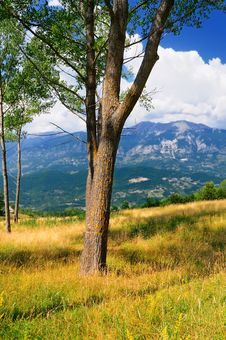 Free Abruzzo Tree And Landscape Stock Images - 6006014