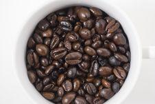 Free Coffee Beans Stock Photos - 6006193