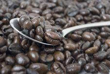 Free Coffee Beans Stock Image - 6006231