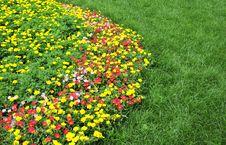Free Flower Land Stock Photo - 6007640