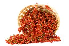 Free Red Currant Stock Image - 6008841