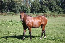 Free Brown Horse Stock Photos - 6009093