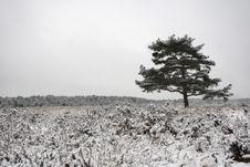 Free Snowy Heath Royalty Free Stock Photos - 6009368
