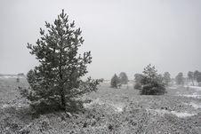 Free Snowy Heath Stock Photo - 6009520