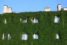 Free House Fully Covered By Ivy Creeper Stock Photos - 6009633