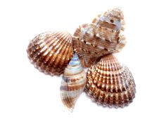 Free Shells Stock Photography - 6009882