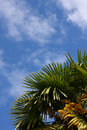 Free Palm Leaves And Blue Sky Royalty Free Stock Photography - 6010777