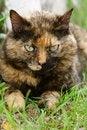 Free Calico Cat Stock Photo - 6012060