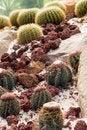 Free Barrel Cactus Royalty Free Stock Photography - 6019497