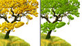 Free Golden Tree And Green Tree Royalty Free Stock Image - 6019966