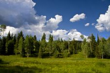 Free Mountain Meadow Royalty Free Stock Images - 6010709