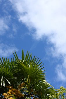 Free Palm Leaves And Blue Sky Stock Images - 6010764