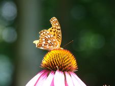 Free Resting Butterfly Stock Image - 6011311