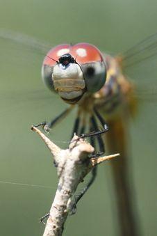 Free Dragonfly Stock Photo - 6011380