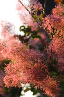 Free Bright Pink Twigs Stock Image - 6011421