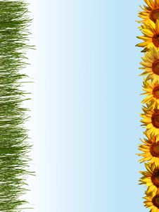 Free Line Of Sunflowers Royalty Free Stock Images - 6011799