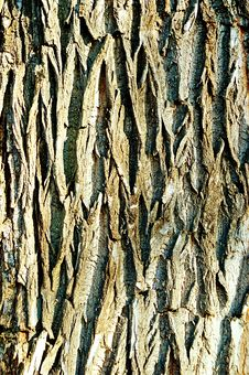 Free Bark Stock Photo - 6011830
