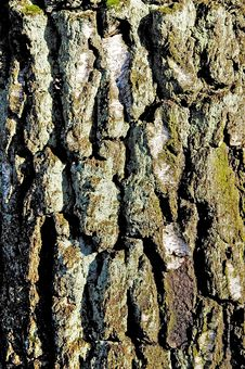 Free Bark Royalty Free Stock Images - 6011959