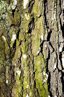Free Bark Stock Images - 6011974