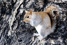 Free Squirrel Royalty Free Stock Photo - 6012005