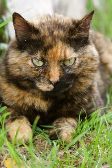Free Calico Cat Stock Photo - 6012060