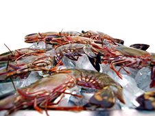 Free Big Sea Tiger Prawns Tray Five Stock Image - 6012091