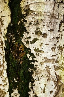 Free Bark Stock Photos - 6012123