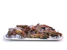 Big Sea Tiger Prawns Tray Four Royalty Free Stock Photography