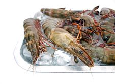 Big Sea Tiger Prawns Tray Three Stock Image