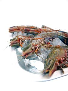 Free Big Sea Tiger Prawns Tray Two Royalty Free Stock Photography - 6012207