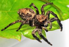 Free Spider Shaggy Stock Photo - 6012810
