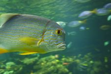 Free Exotic Fish Stock Image - 6013031