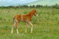 Free Foal Stock Photos - 6013523