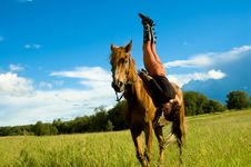 Free Horse Stock Images - 6014914