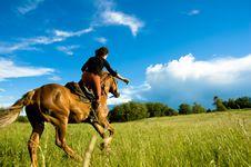 Free Horse Royalty Free Stock Photos - 6014918