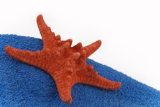 Free Starfish Royalty Free Stock Photo - 6016295