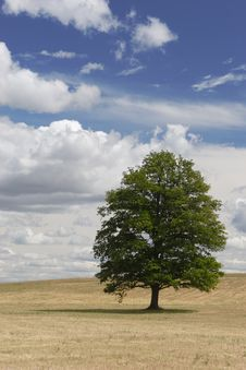 Free Lonely Tree Royalty Free Stock Image - 6016916
