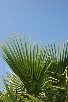 Free Leaf Of Palm Tree. Royalty Free Stock Photo - 6017855